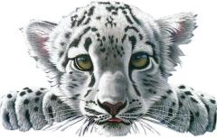 RAJZ White Tiger Baby