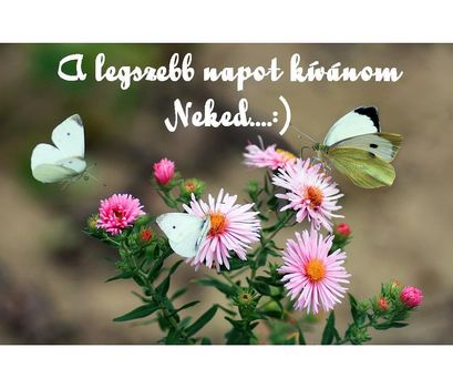 A legszebb napot kívánom Neked
