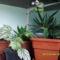 Begonia,Kaktuszok