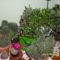 Kaktuszaim,Folyoka