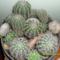 Kaktusztal