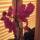 Orchidea_012_1239723_8540_t