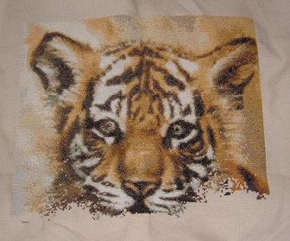 RAJZ tiger