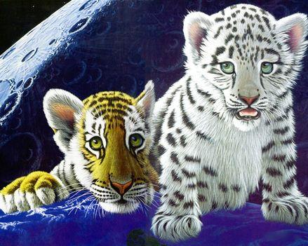 RAJZ tiger-brothers_1280x1024_3148