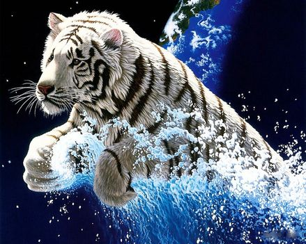 RAJZ tiger-splash_1280x1024_3151