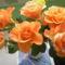 rózsa mind 4