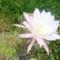 Tüskés  virágaim 1.