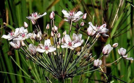 Nagy Morotva Rakamaz virágkáka