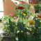 részlet a kertből