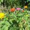 rézvirágok (legényrózsa)
