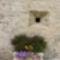 Chateau -Arnoux (5)