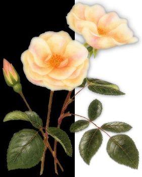 szálas virágos kép 12