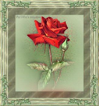 szálas virágos kép 5
