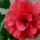 Classik_red_1246665_4356_t