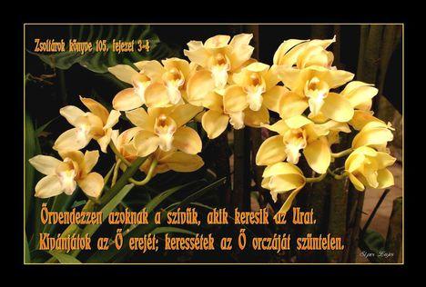 Bibliai idézetes kép 15