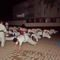 Karate tábor 115