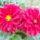 Arany Panni virágai