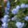 Király Monika növényei