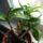Terék Krisztina orchideái