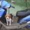 Vahur motorozni akar