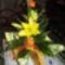Vass Lászlóné! Szívből jövő jókívánságaimat küldöm -virágcsokrommal együtt- NÉVNAPODON! E.