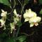 Lepkeorchidea a Fővárosi Állat- és Növénykertben