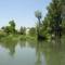 Kimle, Mosoni-Duna a magyarkimlei kertek mögötti szakaszon, 2003. június 23.-án