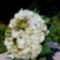 Krém-zöld menyasszonyi körcsokor