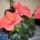 Bodnár Ilona virágai