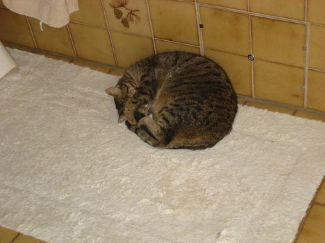 Egy gombolyag cica