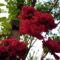 Kerti virágaim 14