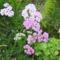 Kerti virágaim 4