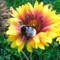 Kerti virágaim 8
