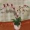 különleges orchidea