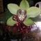 Orchidea fej sisal tölcsérben