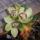 Orchidea fejek sisal tölcsérben