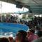 Rimini 5.-Delfinshow aréna