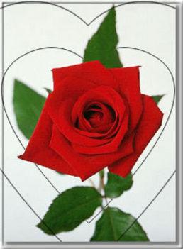 rózsaa