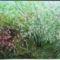 Kép 011   Virágeső