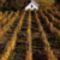 Pilisi szőlőhegy