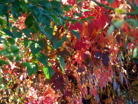 Az  ősz színei   -  kertünkben .