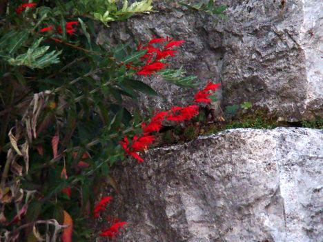 Virág a sziklakertben
