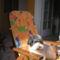 kutyám 9