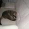macskám alszik