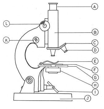 fénymikroszkóp felépítése