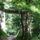 Cuhai erdő, erdei Cuha