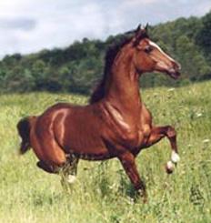 lovas kép 14