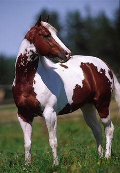 lovas kép 1