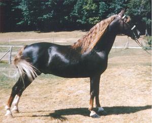 lovas képek 3