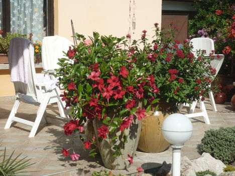 a terasz virágai
